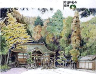 うっそうとした小野原の 「春日神社の樹林」
