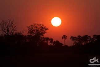 Sonnenuntergang beim Tubu Tree Camp