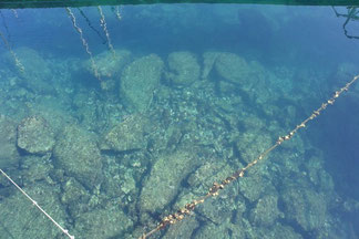 マリーナにトイレ休憩。水が意外と綺麗!!魚もたくさんです。