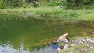 Der Einstieg ins Wasser wird mit solider Zimmermannsarbeit erleichtert...