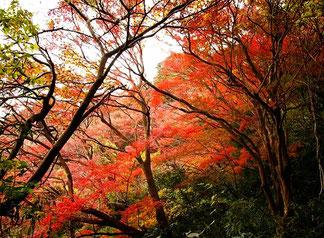 京都の福祉施設訪問の帰り道