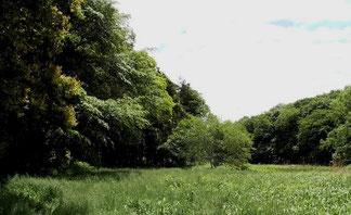 谷戸内樹木の回廊 刈り倒さず残しています クリックで拡大
