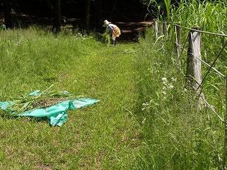 大きなビニールシートで刈った草を搬出します