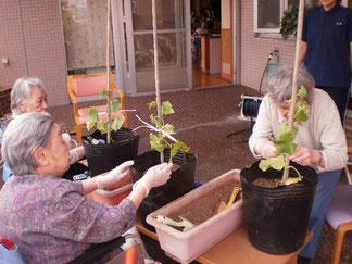 テラスでの苗植えの様子。今年も元気に育ってくださいね。
