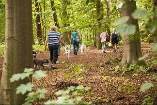 Eine Gruppe von Hundebesitzern läuft mit ihren Hunden beim Hundetraining durch den Wald