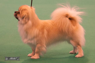 Bristow on Crufts