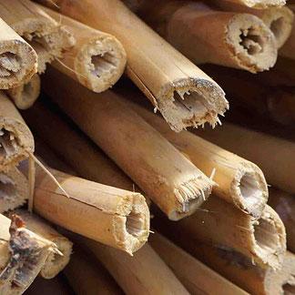 Bambusgras - Bambus - für Bambuszahnbürsten und andere nachhaltige Produkte. Bambus für apfeldental.at - Naturzahnbürste aus Österreich