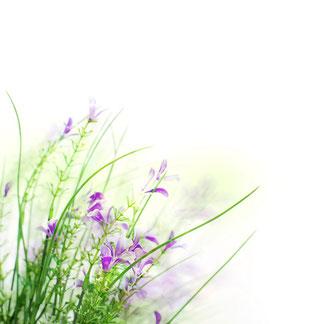 パールフェイスエステティック イリス,iris,ミキモト コスメティックス,岡山市中区,フェイシャルエステティックサロン,予約