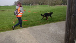 Rallye canin