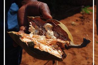 Fruit du baobab - Bouye