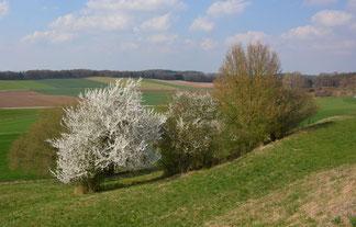 Kulturlandschaften mit vielen Struktur und Landschaftselementen stärken die biologische Vielfalt (Foto: StMELF)