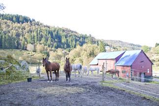 Hestepensjon