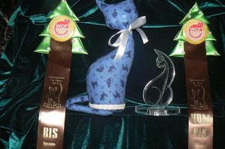 Две кошечки и 1 котик = 3 Номинации на BIS!