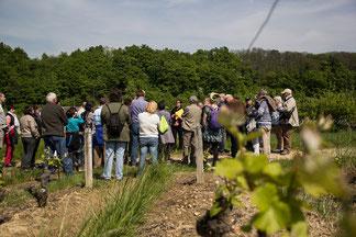 visite-vignoble-Vouvray-Touraine-Tours-Vallee-Loire-groupe-tour-operator-agence-voyage-Rendez-Vous-dans-les-Vignes-Myriam-Fouasse-Robert