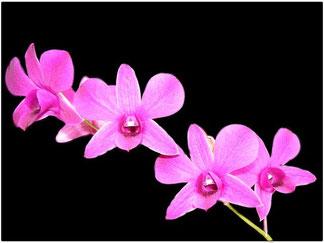 Orchideen preisen die Schönheit