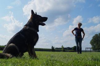 Hunde ganz groß in der Hundeschule Asmann