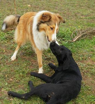 So sehen Hunde beim Spielen und Knutschen aus