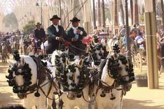 Feria del Caballo Jerez 2012