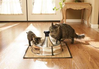 fontaine à eau pour chat et chien