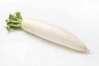 新鮮で綺麗な白大根