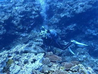 石垣島でのんびりダイビング「ちびカメ」ヒートハートクラブ