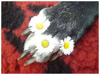 Pfote mit Blumen