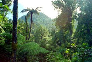 unterwegs im geschützten Regenwald