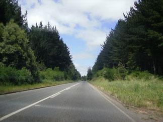 Camino a Cañete Región del Bio- Bio