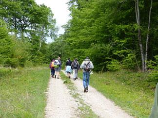 venez randonner sur les entiers balisés du pays d'othe, découvrir les circuits de grande randonnée,