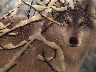 Wölfe, Leser, Ideen, Kanada, Liebe, Selbstfindung