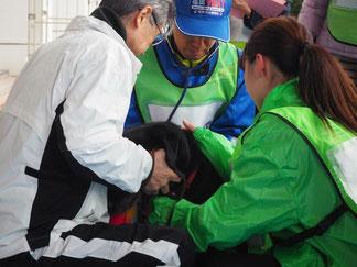 福岡県の原子力防災訓練で、聴診するVMAT獣医師と保定するVMAT動物看護師