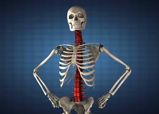 """Курс """"Основы физиологии и анатомии"""""""
