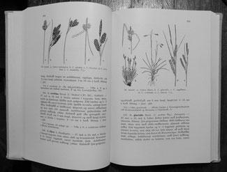 exemple de 2 pages du livre d' Áskell Löve
