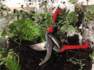Ideal für kleine Schneidearbeiten: Blumensträuße, Kräuter etc. die kleine Stecklingsschere bei www.the-golden-rabbit.de