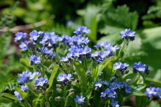 """""""Blaues Wunder"""" ist eine Seedball-Mischung die die schönsten Blau blühenden Gartensorten in sich vereint. Bei www.the-golden-rabbit.de"""