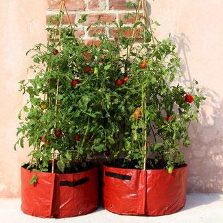 Haxnicks Pflanzsack für Tomaten bei www.the-golden-rabbit.de
