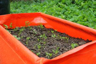 Urban Gardening Pflanzsack in orange für Möhren