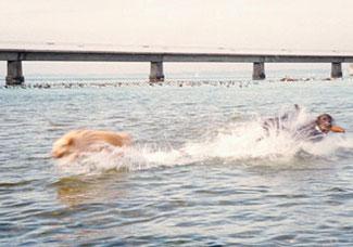 Springender Hund im Wasser mit längerer Belichtungszeit.