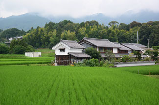 rice field in Ogi village