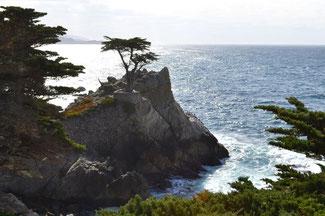 Ein Baum auf einem Felsvorsprung im Meer