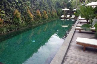 Der Pool des Hotel Sapodilla