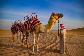 Abu Dhabi, UAE, VAE, Vereinigte Arabische Emirate, Wüste, Wüstentour, Dünen, Sand, Kamele