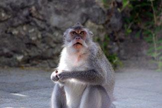 Tierischer Standbewohner am Labuan Sait Beach