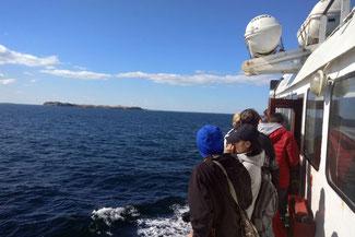 Isla Magdalena, Pingiune, Patagonien, Südamerika, Chile, Die Traumreiser