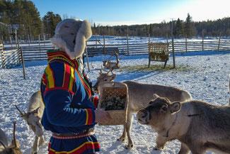 Lappland, Finnland, Finnisch Lappland, Die Traumreiser, Levi, Rentiere, Rentier Farm