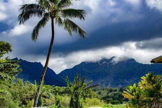 Kauai, Hawaii, USA, Vulkan, Berge, Palme, Die Traumreiser