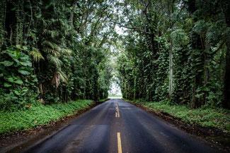 Kauai, Hawaii, USA, Straße, Bewachsen, Die Traumreiser