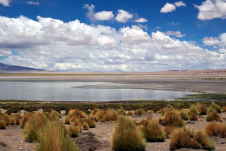 Tara, Saltflat, Salzebene, Atacama, Atacamawüste, Südamerika, Chile, Die Traumreiser