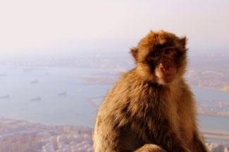 Seilbahn, Gibraltar, Felsen, Affen, Aussicht, Die Traumreiser
