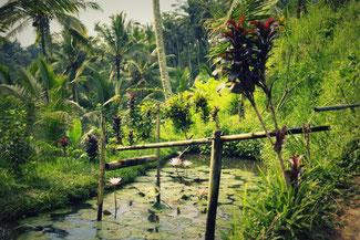 Das ausgeklügelte Bewässerungssystem